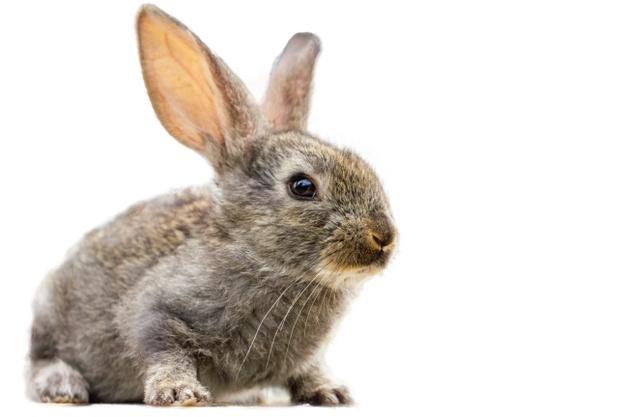 løbegård til kanin
